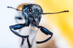 Beetle face Stock Photo