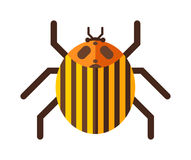 Beetle flat insect bug in cartoon style vector illustration Stock Photos
