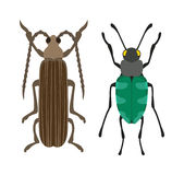 Beetle flat insect bug in cartoon style vector Royalty Free Stock Photography