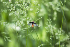 Beetle in flight. A beetle landing on a spike Stock Photography