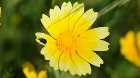 Beetle flower stock video footage