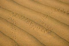 Beetle footprints Stock Photography