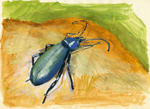 Beetle gouache painting. Gouache painting of a beetle on brown and green Royalty Free Stock Photos