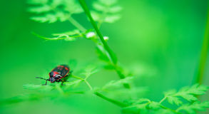 Beetle on grass Stock Image
