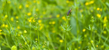 Beetle on grass at the top. Background image of grass and beetle on top Stock Photography