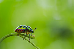 Beetle in green nature macro Royalty Free Stock Photos