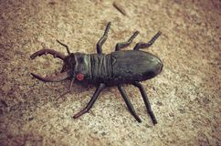 Beetle on a huge stone, toy Royalty Free Stock Photo