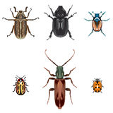 Beetle illustrations Stock Photography