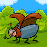 Beetle insect cartoon illustration Royalty Free Stock Image