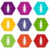 Beetle insect icon set color hexahedron. Beetle insect icon set many color hexahedron isolated on white vector illustration Stock Photos