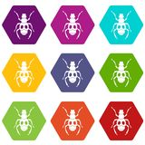 Beetle insect icon set color hexahedron. Beetle insect icon set many color hexahedron isolated on white vector illustration Stock Photography