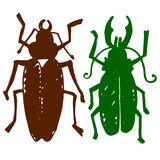 Beetle insect. Nature water beetle and zoology water beetle. Wil Stock Photos