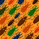 Beetle insect. Nature water beetle and zoology water beetle. Wil Stock Image