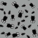 Beetle insect seamless pattern 663 Royalty Free Stock Image