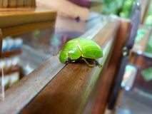 Beetle inside Royalty Free Stock Images