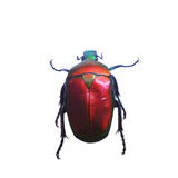 Beetle isolated on white background Royalty Free Stock Images