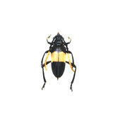 Beetle isolated on white background Stock Photography