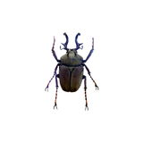 Beetle isolated on white background Royalty Free Stock Photos