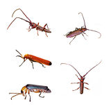 Beetle Isolation Stock Images