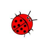 Beetle ladybug red Stock Images