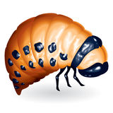 Beetle larvae royalty free stock photos
