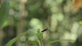 Beetle On A Leaf stock video footage