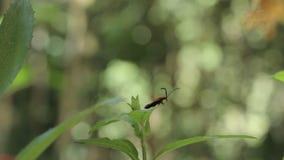 Beetle On A Leaf stock video footage