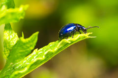Beetle on leaf Stock Photos