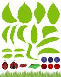 Beetle Leaves Leaf Design Element Set Illustration Royalty Free Stock Photo