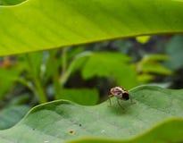 Beetle macro wallpaper Royalty Free Stock Photos