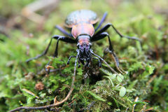 A beetle monster Stock Photography