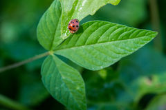 Beetle over leaf in garden Royalty Free Stock Photography