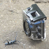 Beetle poses in front of the sport action camera - 1. Unusual blue beetle poses as model in front of the sport action camera - 1 royalty free stock images