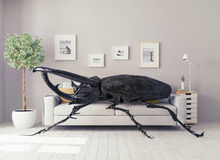 The beetle in the  room Stock Images