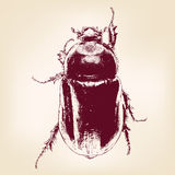 beetle scarab hand drawn vector llustration Stock Images
