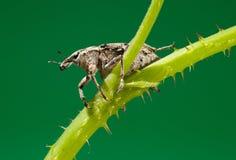Beetle sitting on twig Stock Photos