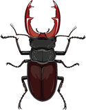 Beetle stag, Lucanus cervus Royalty Free Stock Photography
