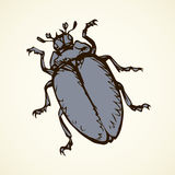 Beetle. Vector drawing. Big cute melolonthinae on white backdrop. Freehand linear dark grey ink color hand drawn picture logo sketchy in art retro scribble style Stock Photo