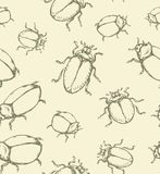 Beetle. Vector drawing. Large cute melolonthinae on white backdrop. Freehand linear dark brown ink color hand drawn picture logo sketchy in art retro scribble Royalty Free Stock Image