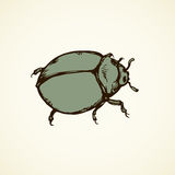 Beetle. Vector drawing. Large cute melolonthinae on white backdrop. Freehand linear dark grey ink color hand drawn picture logo sketchy in art retro scribble Royalty Free Stock Photos