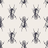 Beetle vintage seamless pattern. Beetles seamless pattern. Vintage hand drawn insects royalty free illustration