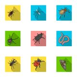 Beetle, wasp, bee, ant, fly, spider, mosquito and other insect species. Various insects set collection icons in flat Stock Photo