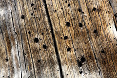 Beetle Wood Texture Stock Photo