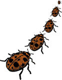 Beetles. Colored beetles walking in line Stock Photos
