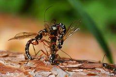 Beetles Royalty Free Stock Photo