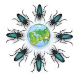 Beetles attacking the earth Royalty Free Stock Photo
