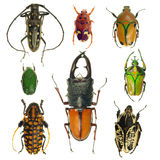 Beetles collection Royalty Free Stock Photos