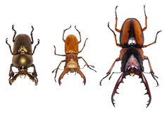 Beetles collection isolated on white background with clipping paths.  royalty free stock photography