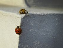Beetles royalty free stock photography