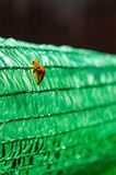 Beetles on green Royalty Free Stock Photography